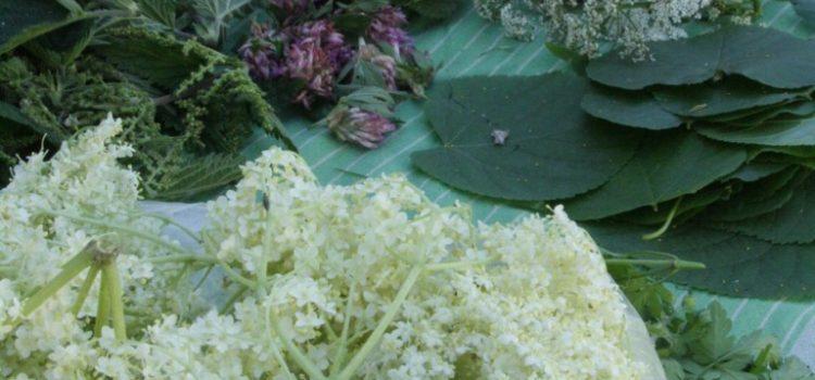 Auf einer Tischdecke ausgebreitete Baumblätter, Blüten und Kräuter