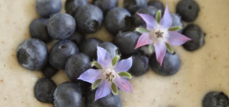 Ein Pudding in einer großen weißen Schüssel. Garniert mit Blaubeeren und Borretschblüten
