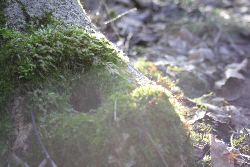 Baumwurzel mit Höhle