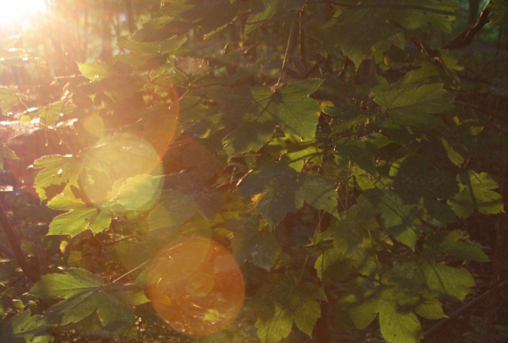 Sonne scheint durch Unterholz