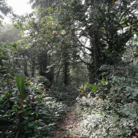 Bäume im afrikanischen Urwald
